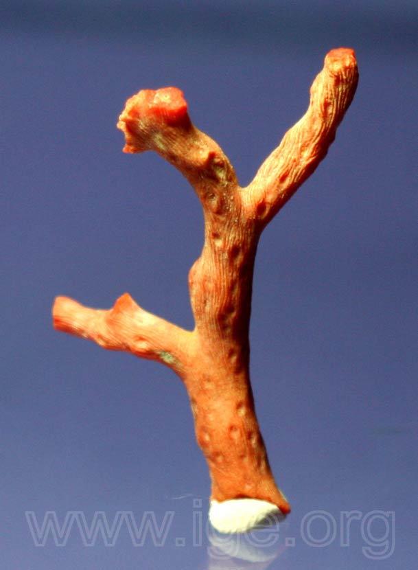 coral-rojol
